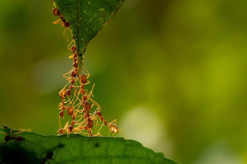 Colonia di formiche