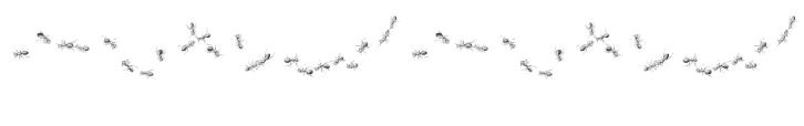 Fila di formiche