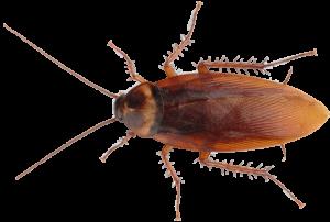 Vettore scarafaggio
